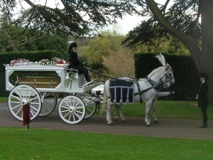 White Horsedrawn hearse